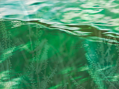 Green  Water Weeds.